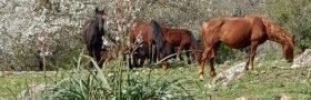 Tolfa – città di cavallo e natura stupenda